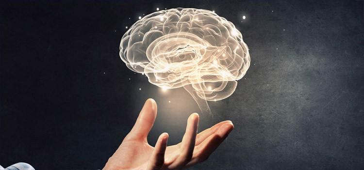 All About Neuroscience / Neurology