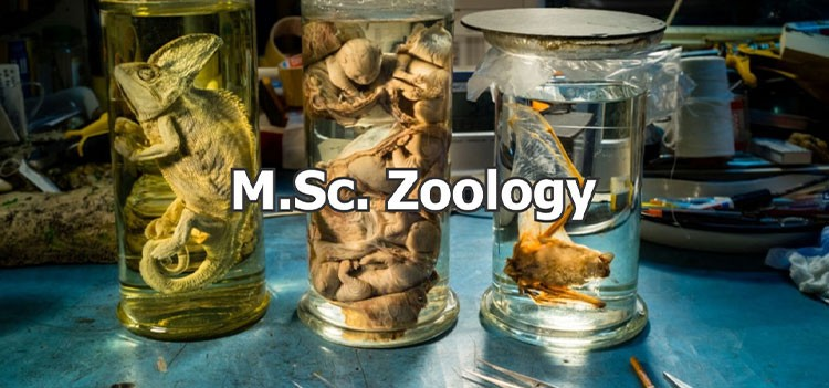 All you should know about M.Sc Zoology Course