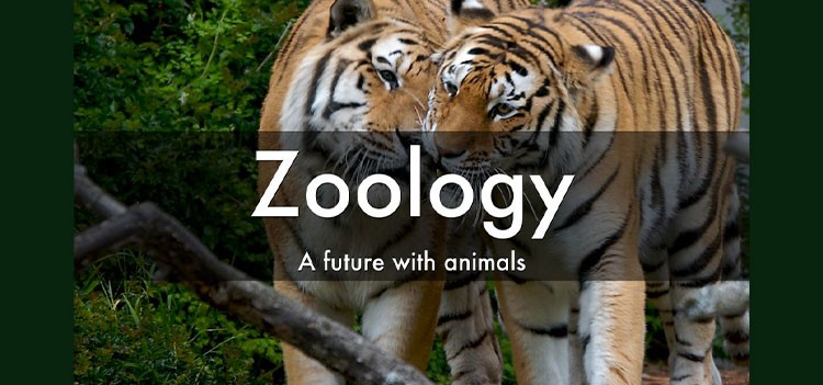 All about B.Sc Zoology