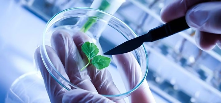MSc-Biotechnology   Admissions In Bangalore